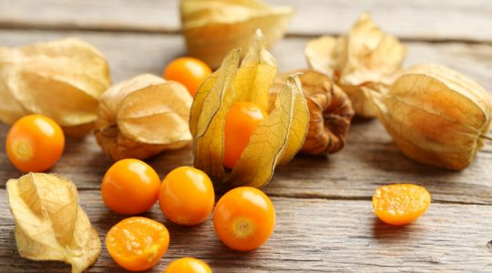 Ripe physalis on a grey wooden table