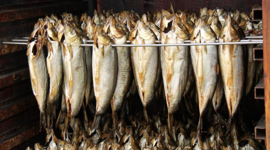 Prepared Kippers Hanging in a Smoking Cabinet.